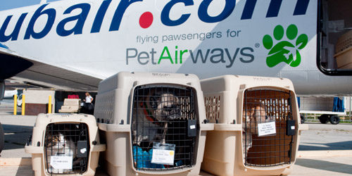 plane-with-pets-lo-1