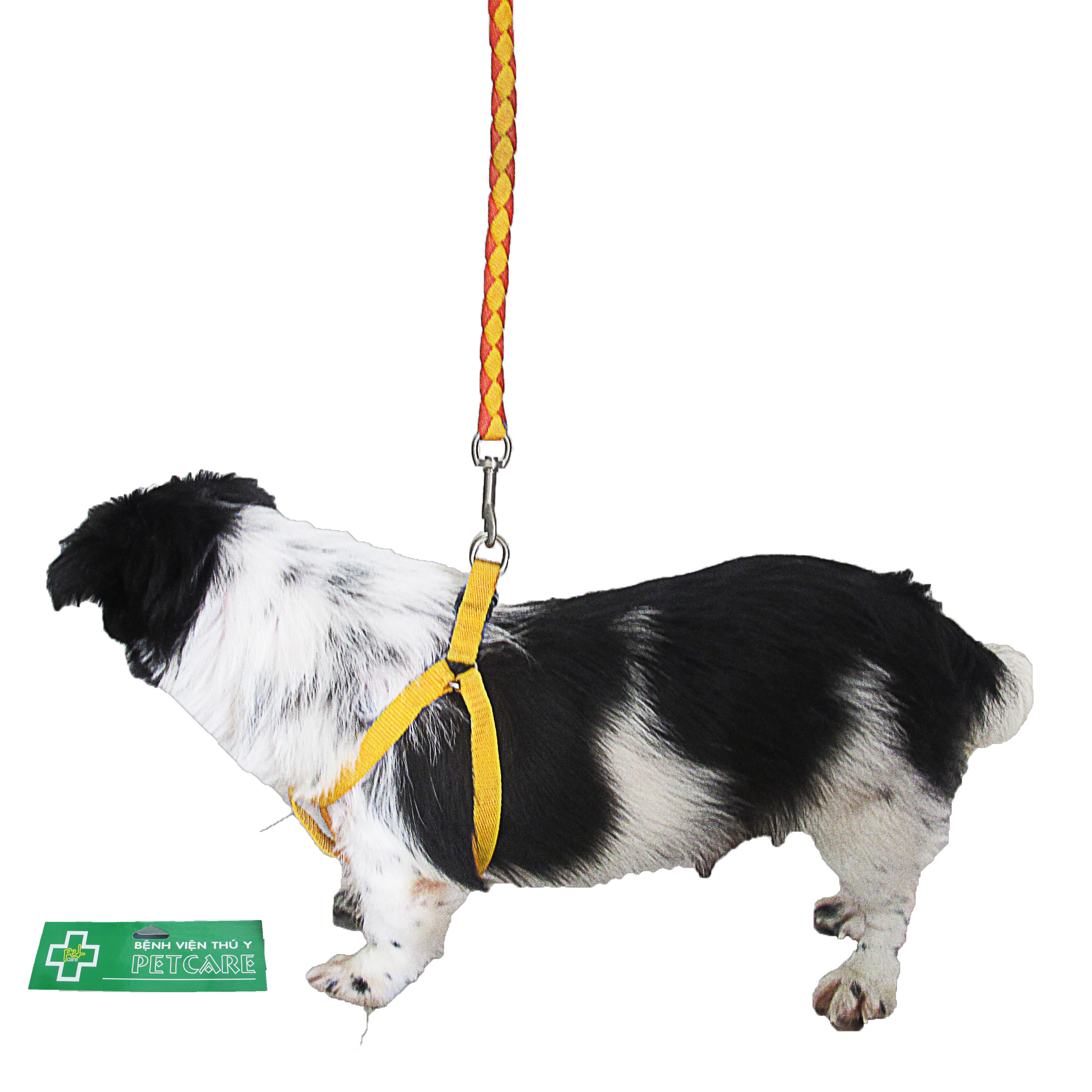 (H) Checked orange and yellow harness