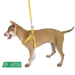 Collars - Harnesses - Leashes